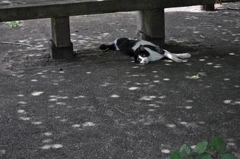 茨城町奥谷公園の主(猫)